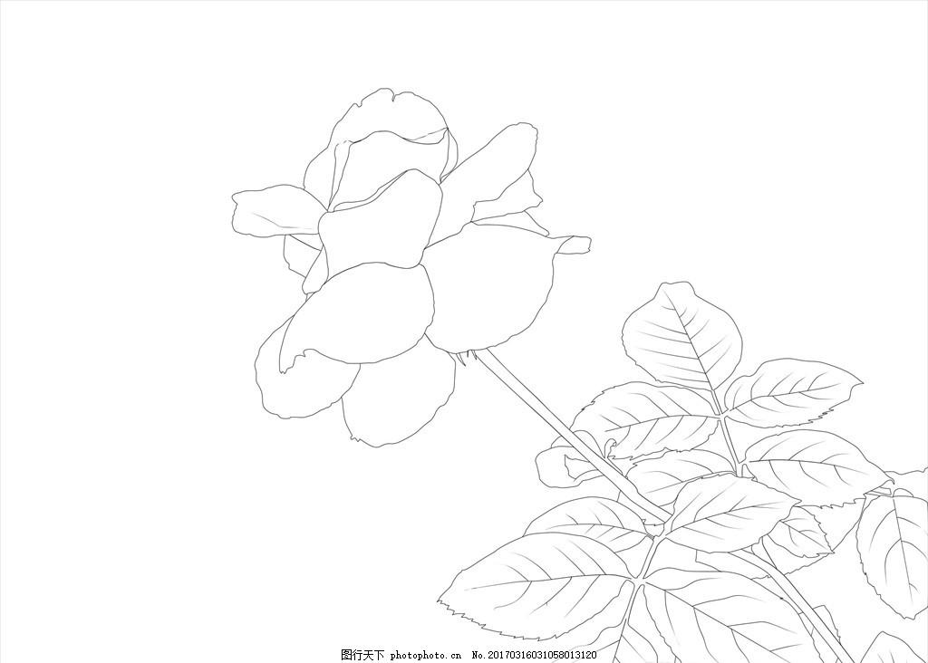 月季花 黑白 线稿 psd ps 花类 植物 线稿 设计 广告设计 其他 72dpi