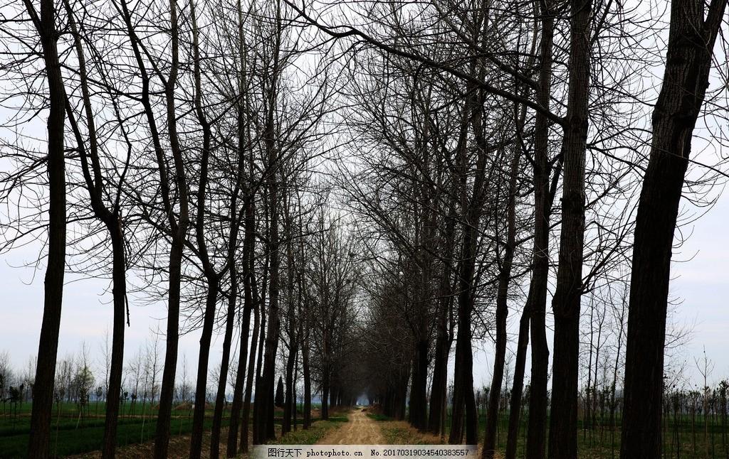 乡村泥土路 泥土路 路边树木 参天大树 乡间小道 田间道路 冬天树木