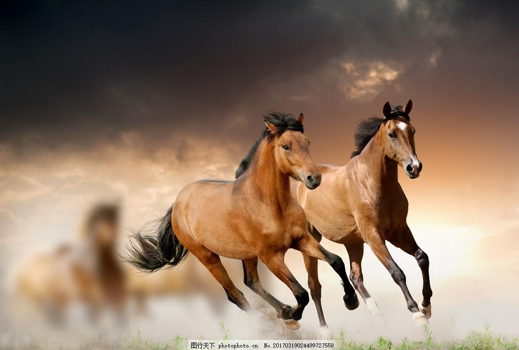 唯美 动物 马 骏马 可爱 野马 千里马 马驹 千里名驹 摄影 生物世界