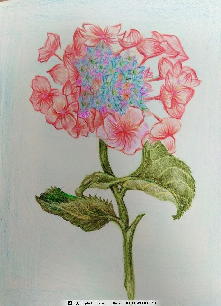 手绘花 彩铅 花朵 手绘花朵 鲜花 小花 文化艺术 绘画书法