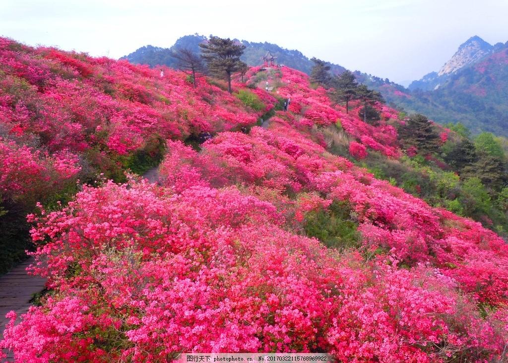 满山红花 鲜花 花海 鲜花海洋 花的海洋 美丽的花 自然风景 摄影 自然