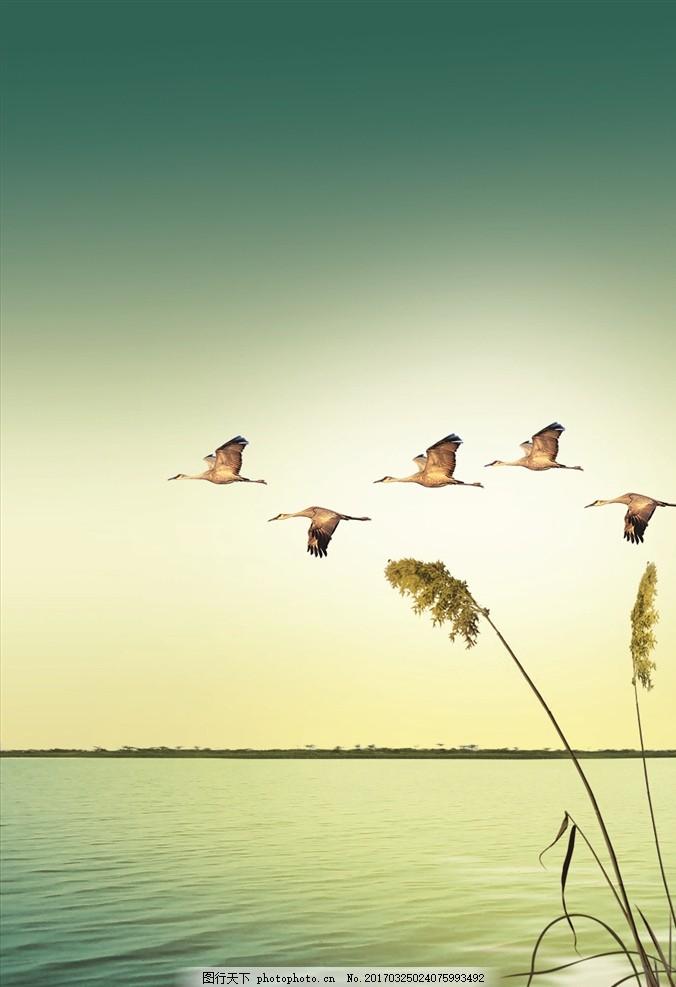 风景 天空 大雁 湖面 草 美丽风景 设计 自然景观 自然风光 150dpi