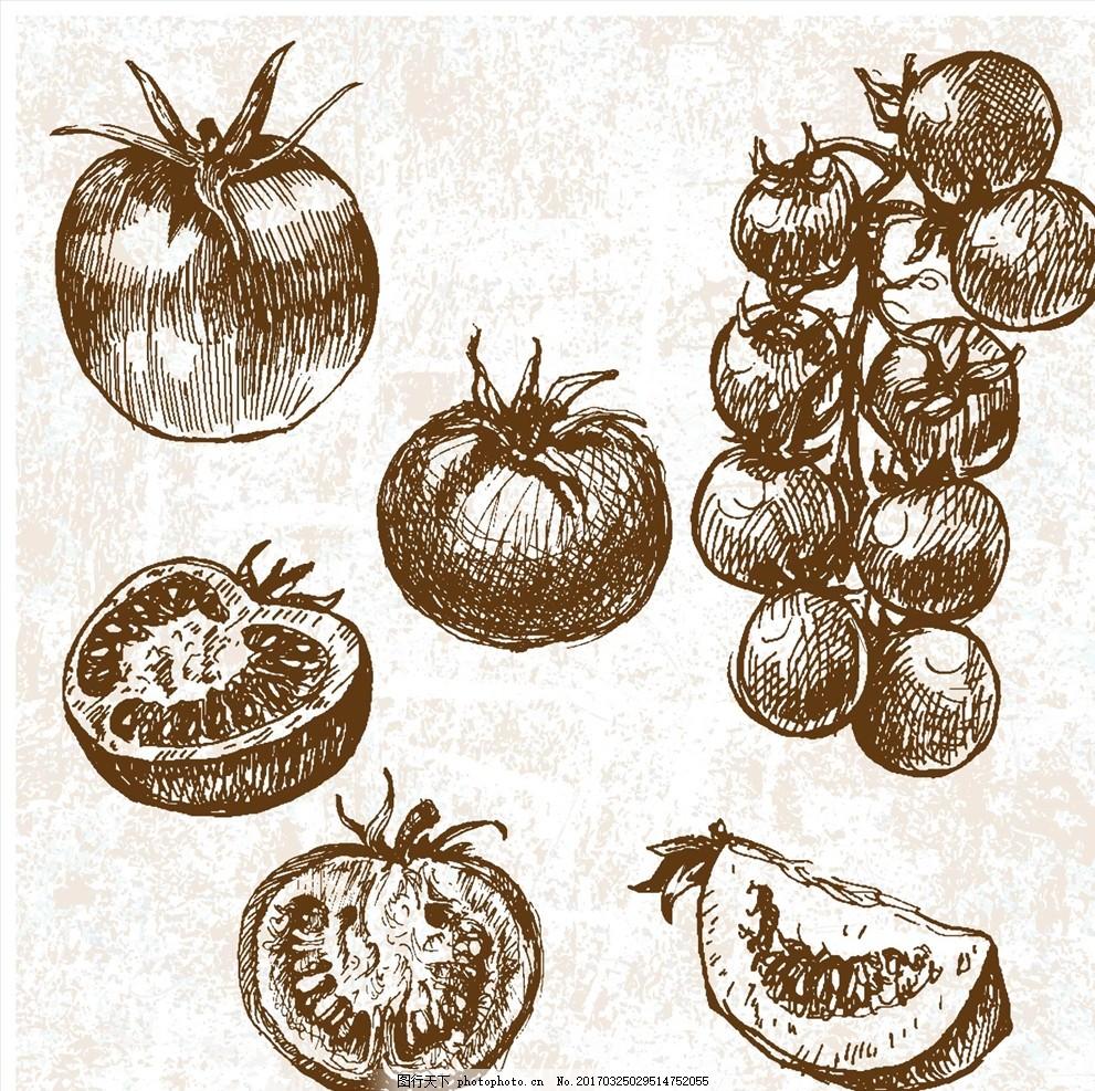手绘番茄西红柿