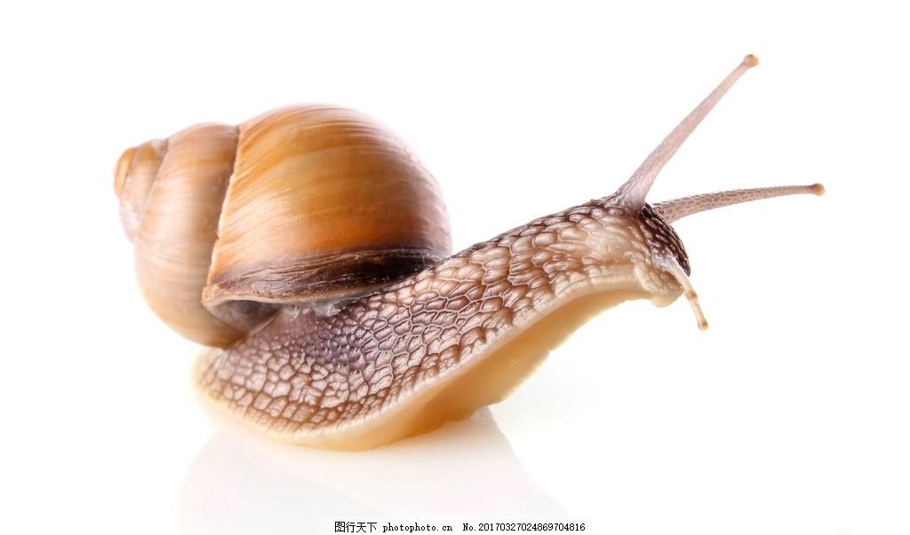 生物 动物 昆虫 卵生动物 蜗牛 摄影 生物世界 昆虫 300dpi jpg