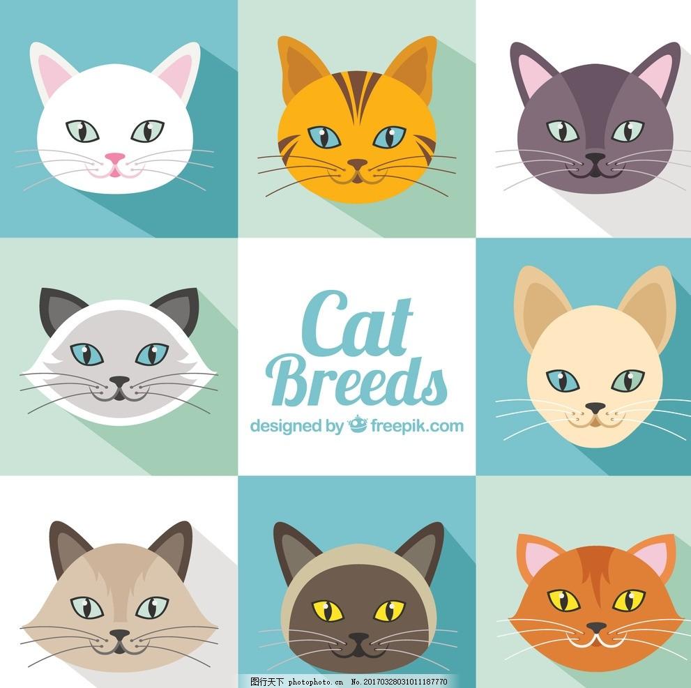 猫猫头像 动物 平板 可爱 宠物 平面设计 波斯猫 品种