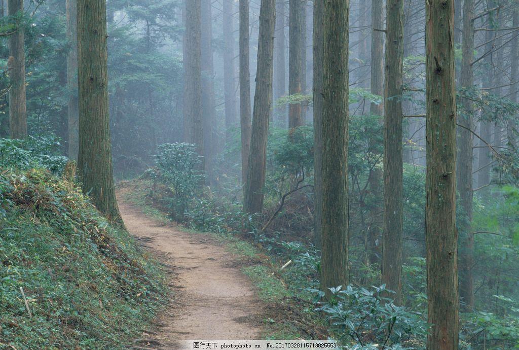 小道 林间小道 道路 土路 树林 森林 摄影 素材 自然风景山水田园