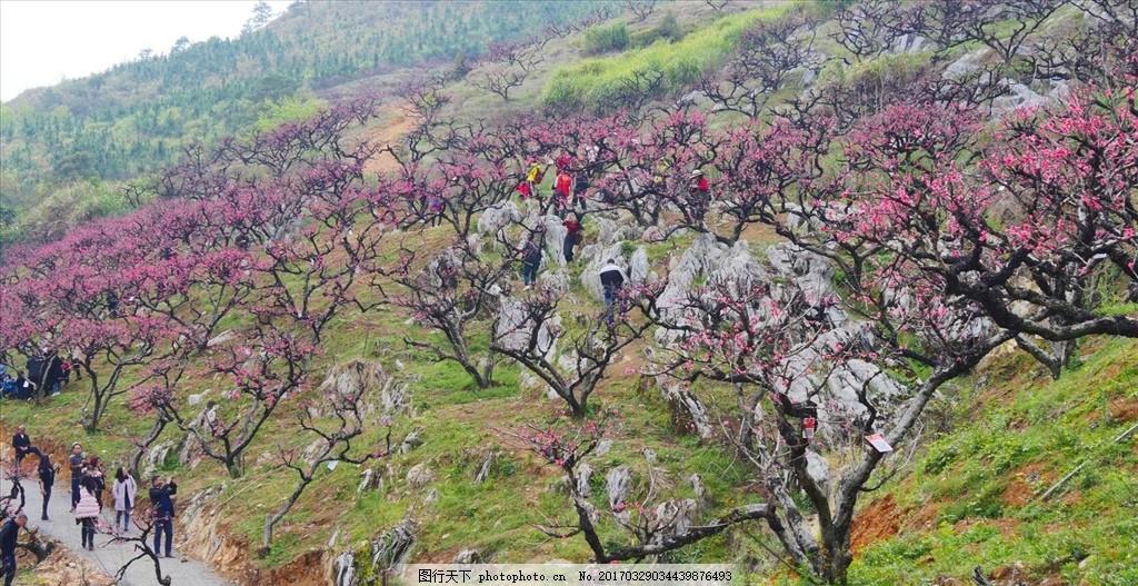 翁源 水墨桃花 摄影 自然 植物 春天 风光 摄影 自然景观 山水风景 18
