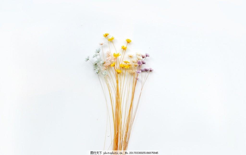 小清新花朵