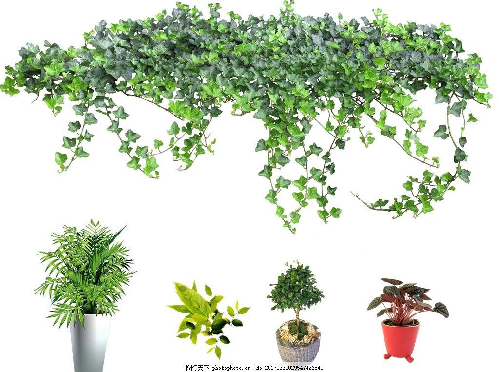 爬山虎 绿植盆栽 藤蔓 花边 绿叶 绿叶花边 装饰花边 树叶 植物