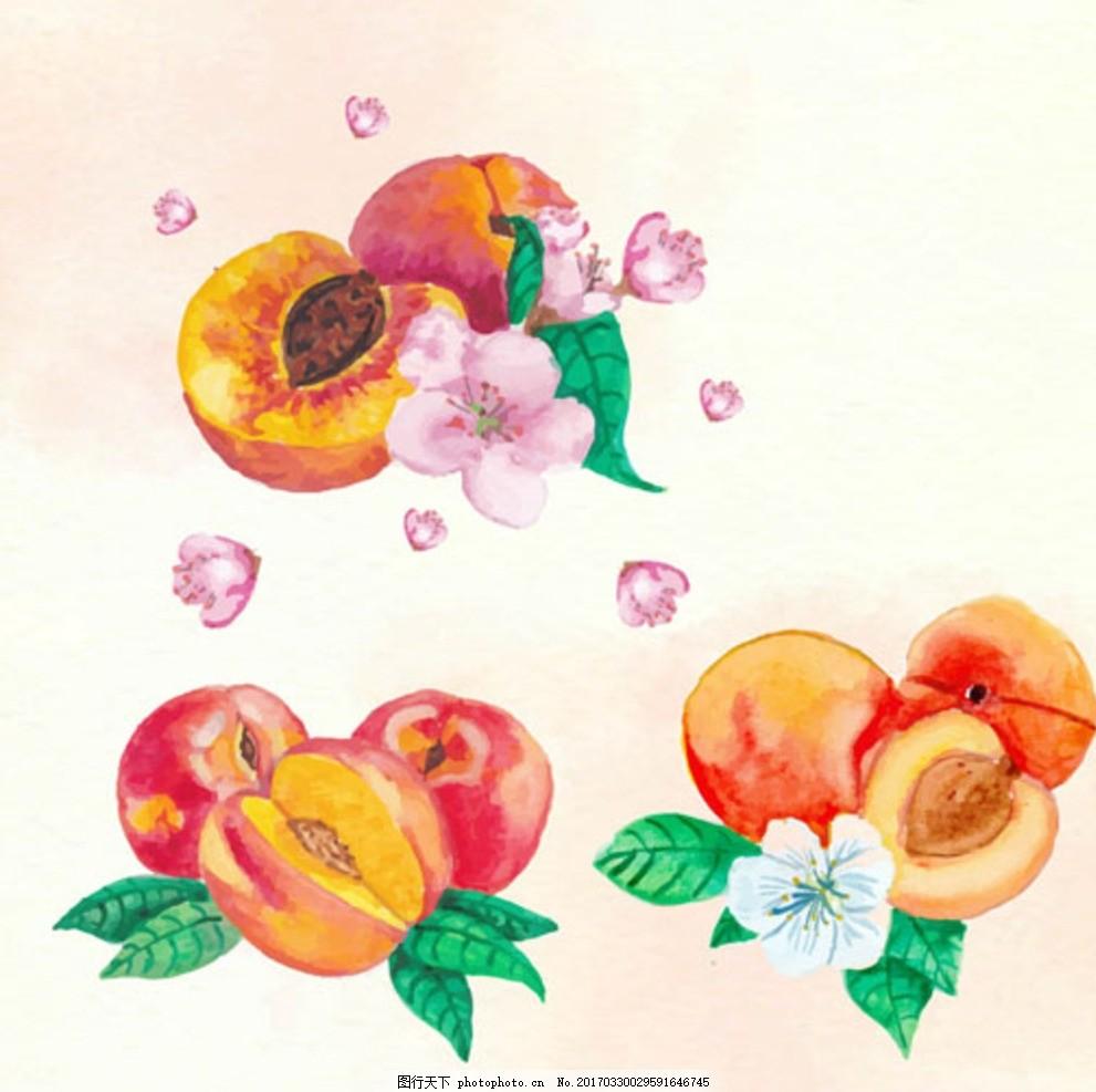 手绘水彩桃子插图