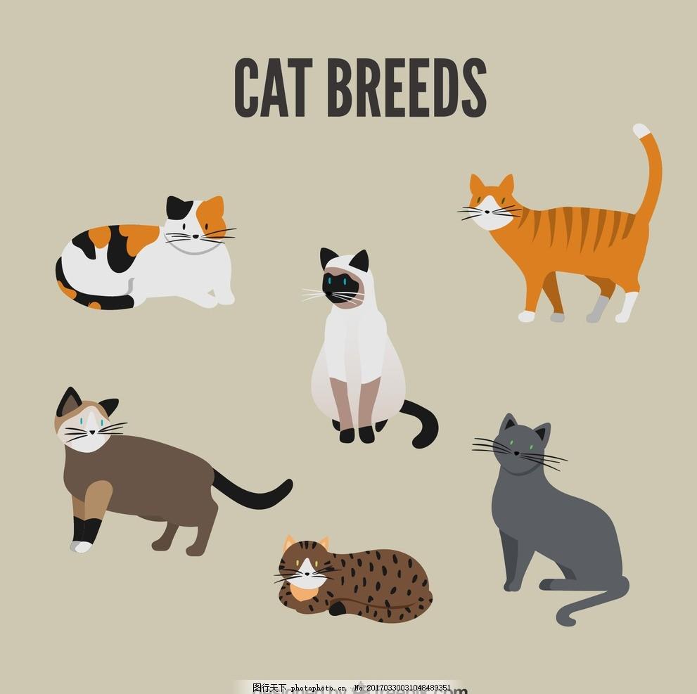 手绘猫图像 自然 动物 可爱 野生 野生动物 品种